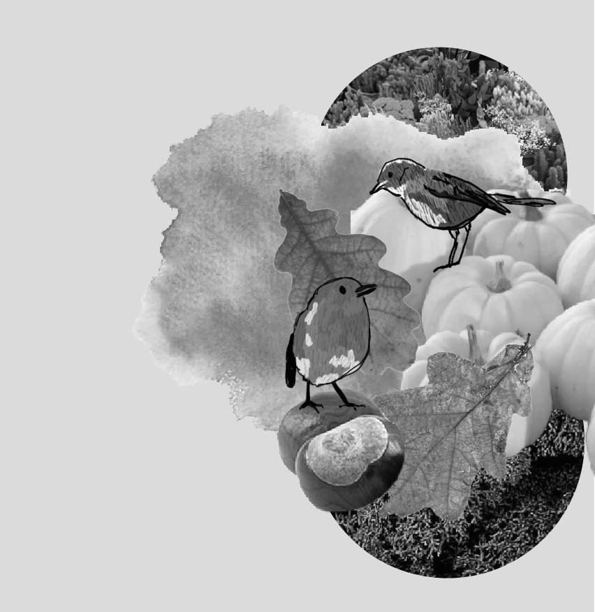 graphisme avec oiseaux et feuilles